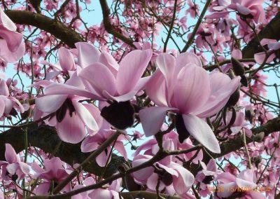 flowers_trip1