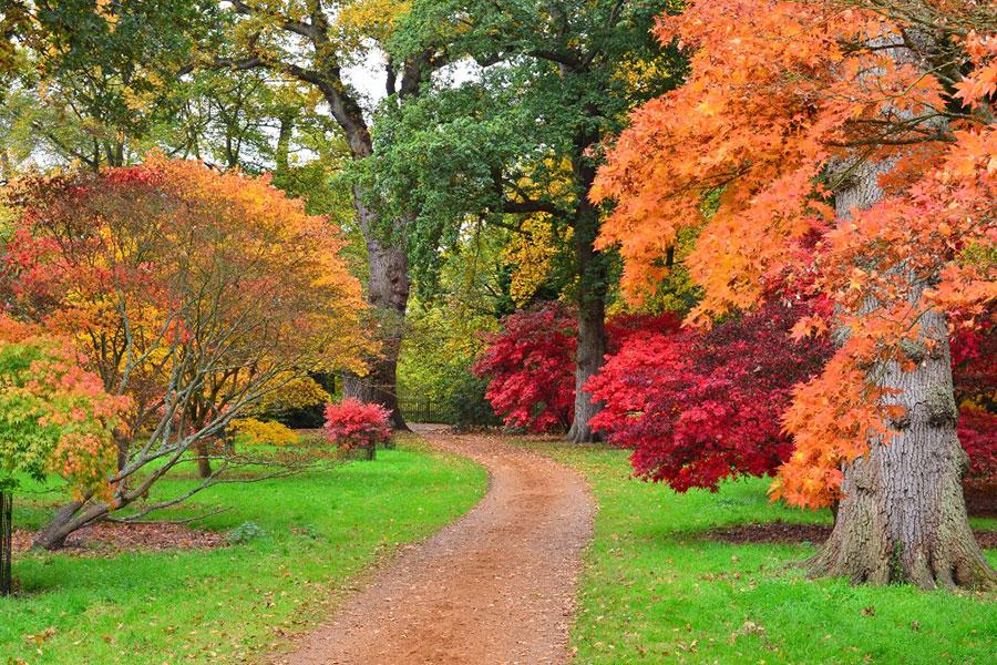 Autumn colour in Windsor Great Park