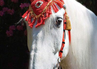 whiteweddinghorse0257